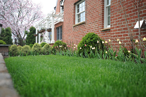 How to Prepare your lawn for Spring                                        5/5(2)