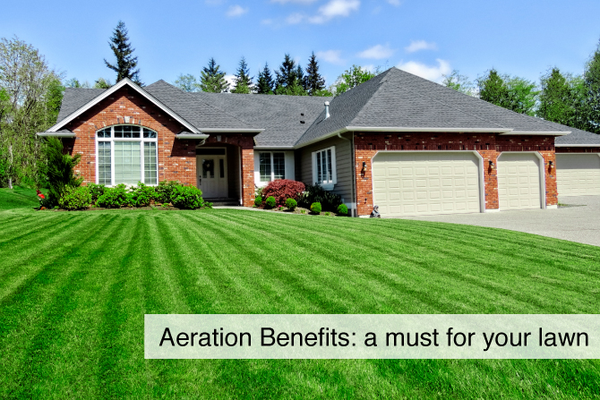 Aeration and Overseeding Tips and Services