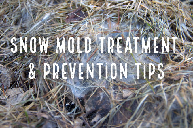 Snow Mold Prevention and Damage Treatment Tips - Lawn Pride