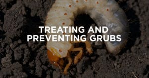 Grub Control Treatment and Prevention