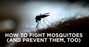 Prevent Mosquitoes in Your Lawn