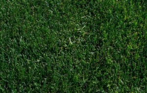 Lawn Pride Indianapolis fertilizer and weed control