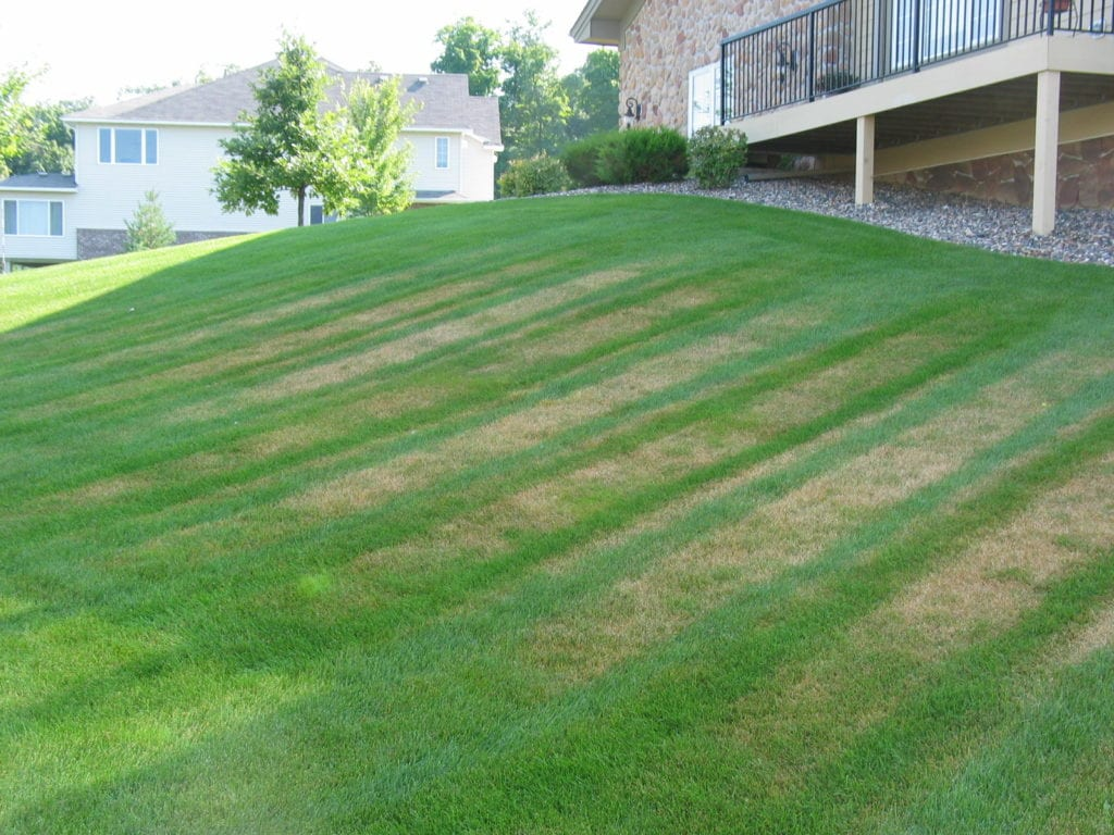 Everything You Need To Know About Lawn Fungus And Turf Disease