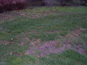 indianapolis lawn care