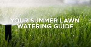 summer-lawn-watering-guide, A Guide to Watering Your Lawn This Summer, Lawn Pride