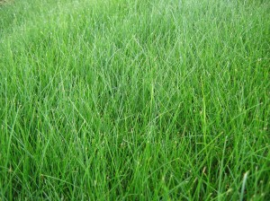 Lawn Pride Indianapolis lawn care and weed control