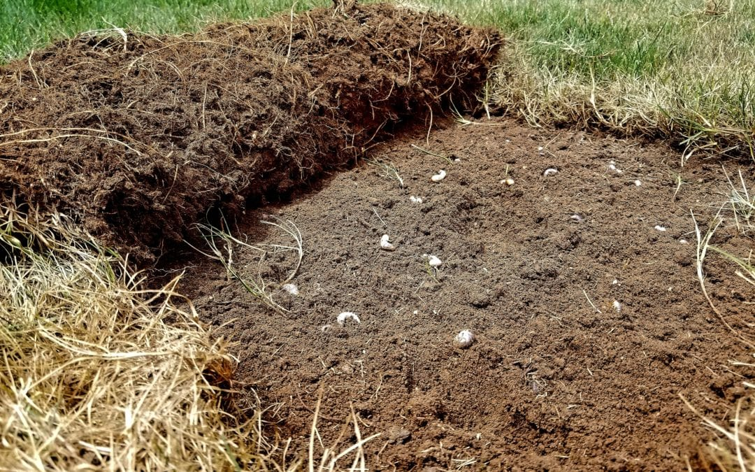 Grubs 101 for Indianapolis Lawns