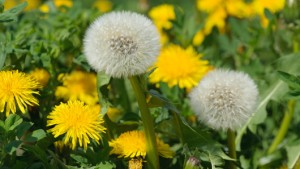 Control weeds with Lawn Pride
