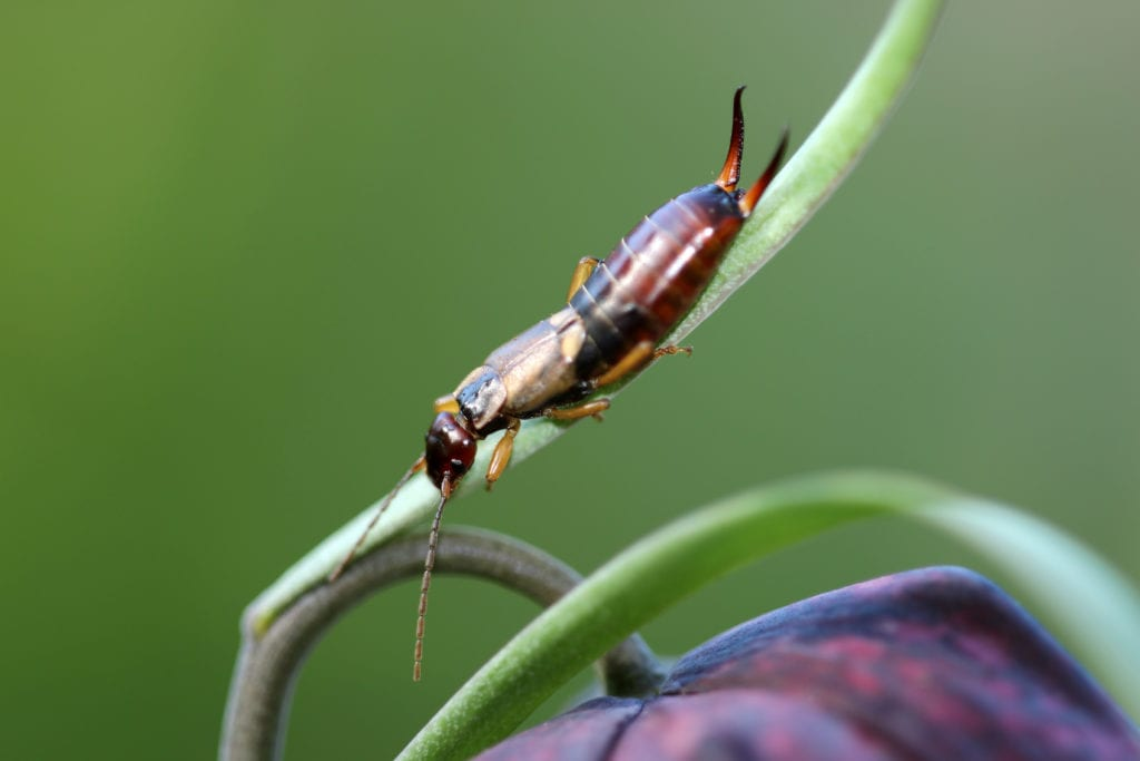 common-indiana-pests, Central Indiana's Peskiest Pests (and How to Keep Them Out of Your Yard), Lawn Pride