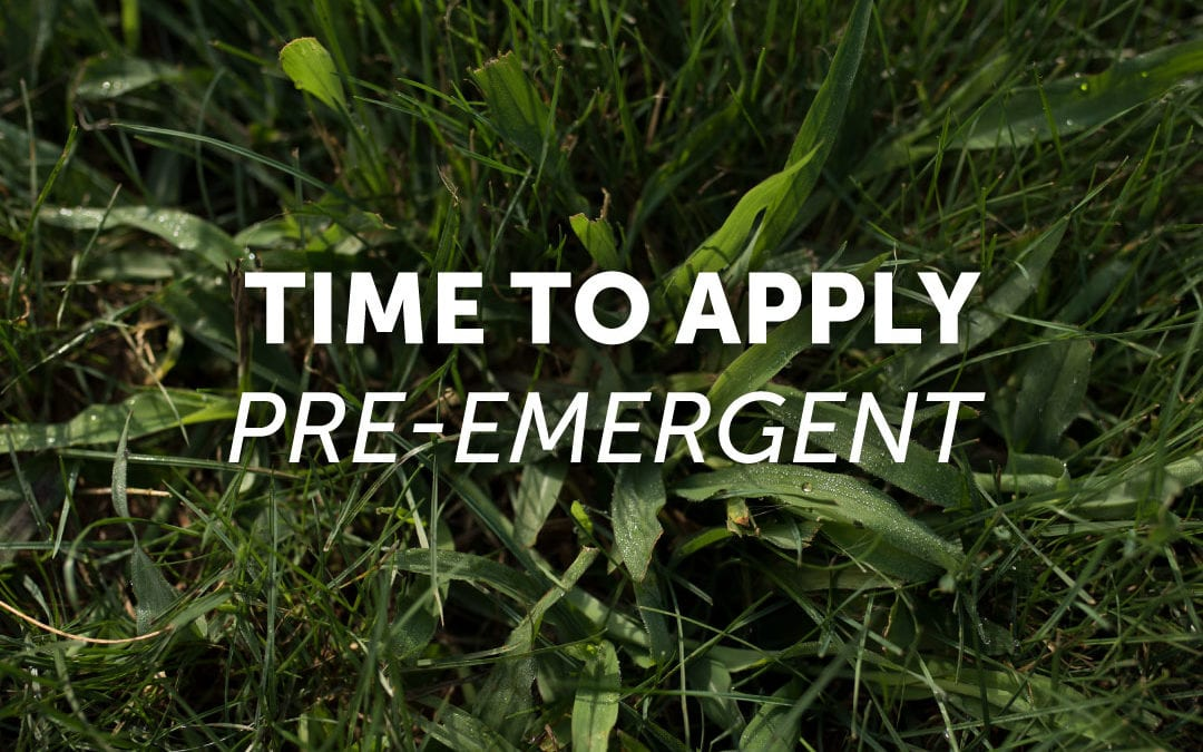 Pre-emergent: Use It Now!