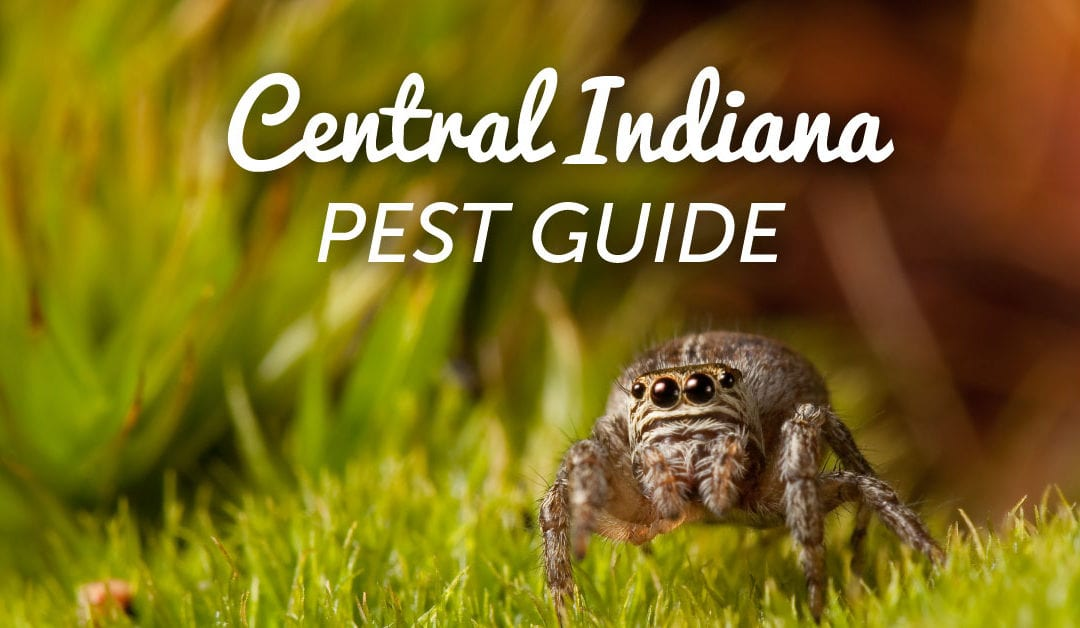 Central Indiana's Peskiest Pests (and How to Keep Them Out of Your Yard)