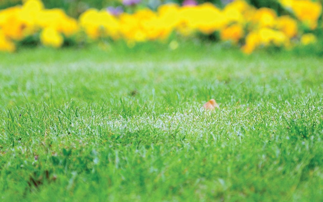 Spring Decoration Ideas for Your Yard