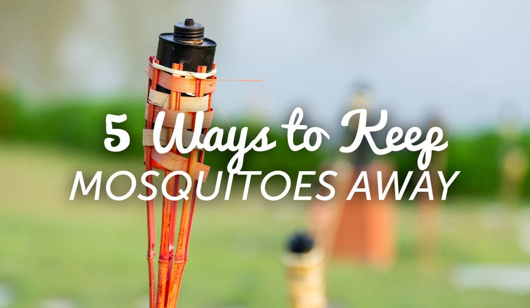Five Ways to Beat Mosquitoes This Summer