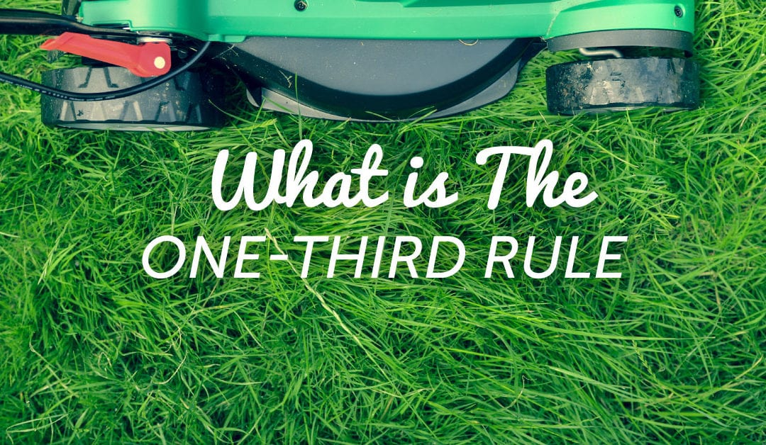 The One-Third Rule = The One Thing You Need to Know to Mow