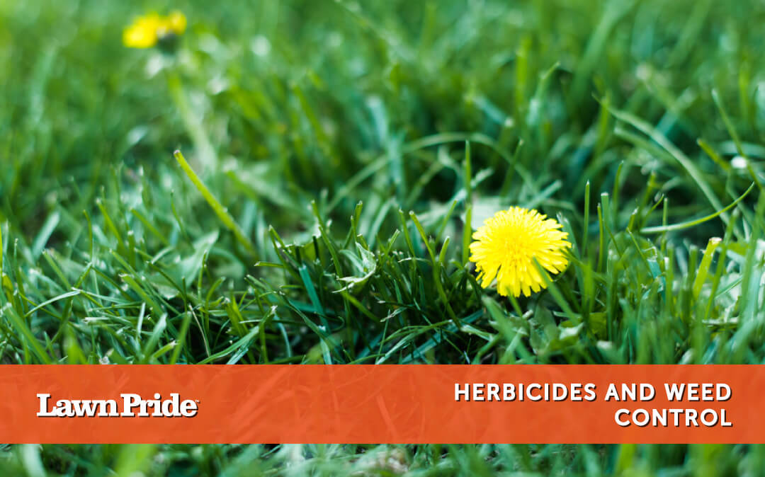 Types of Herbicides