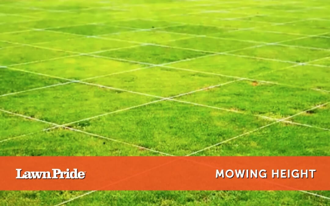 Mowing Tip – Mowing Height