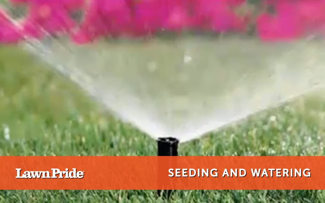 Seeding and Watering