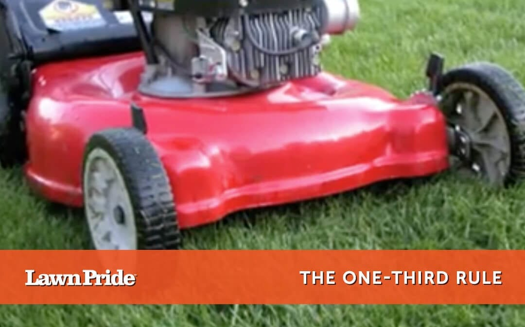 Mowing Tip – One Third Rule