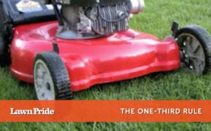 Mowing Tip - One Third Rule