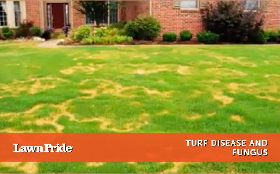 Turf Disease and Fungus