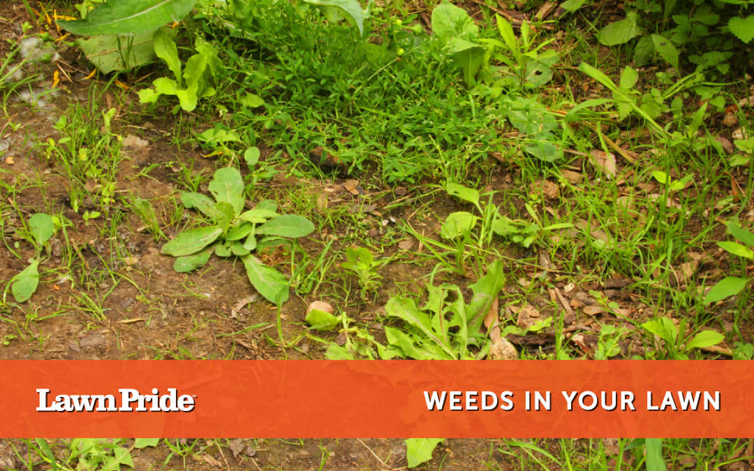 Weeds in your lawnNo ratings yet.