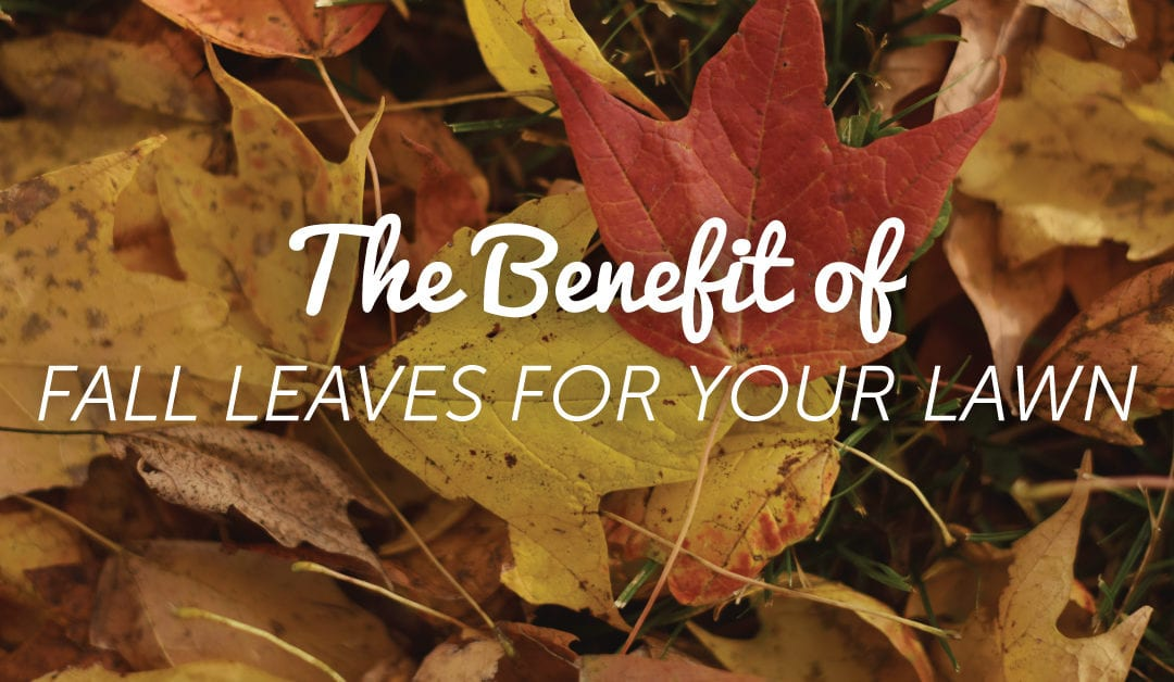 Benefits of Fall Leaves & Your Yard