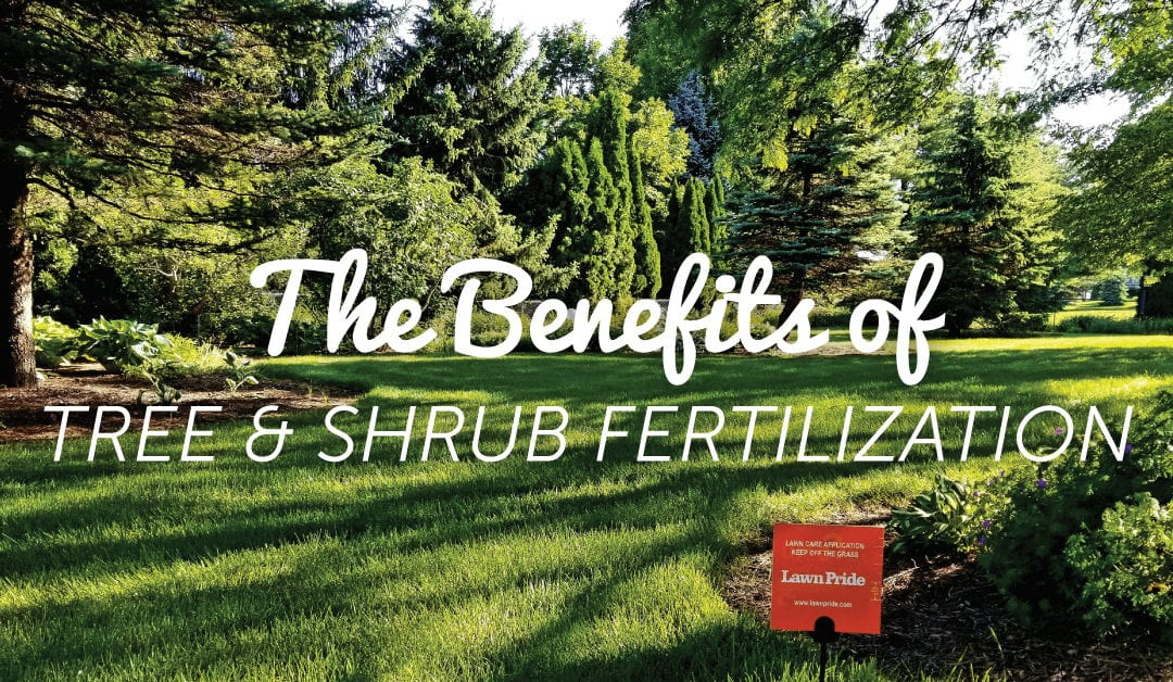 Why You Need to Fertilize Your Trees & Shrubs