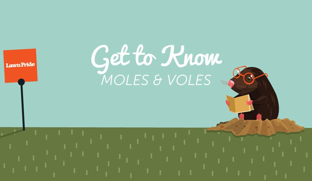 Get to Know Those Moles & Voles (to eliminate & prevent!)