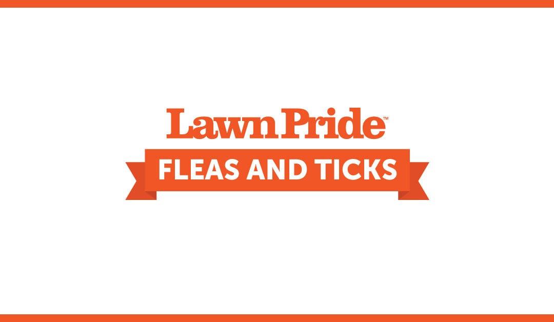 Fleas & Ticks: What Every Homeowner and Pet Owner Should Know