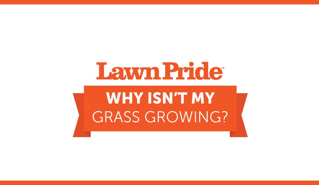 """Why Isn't My Grass Growing?"""