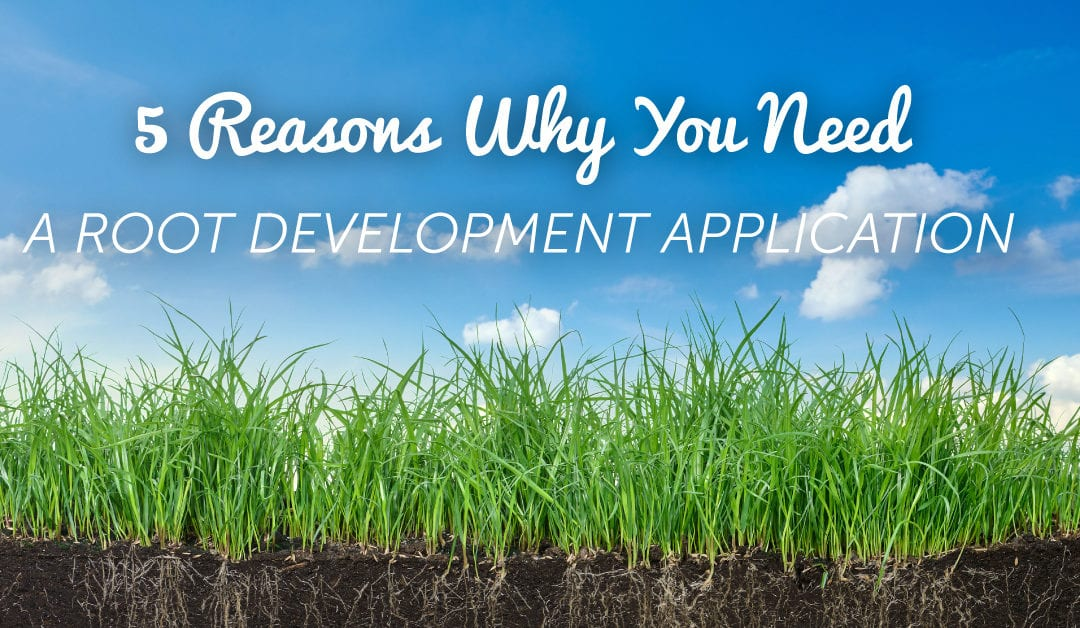 Root Development: 5 Reasons This Is Crucial NOW