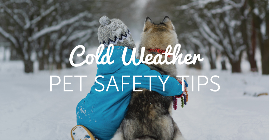 Cold Weather Pet Safety TipsNo ratings yet.