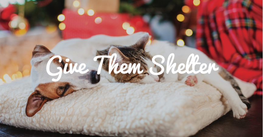 Give Them Shelter