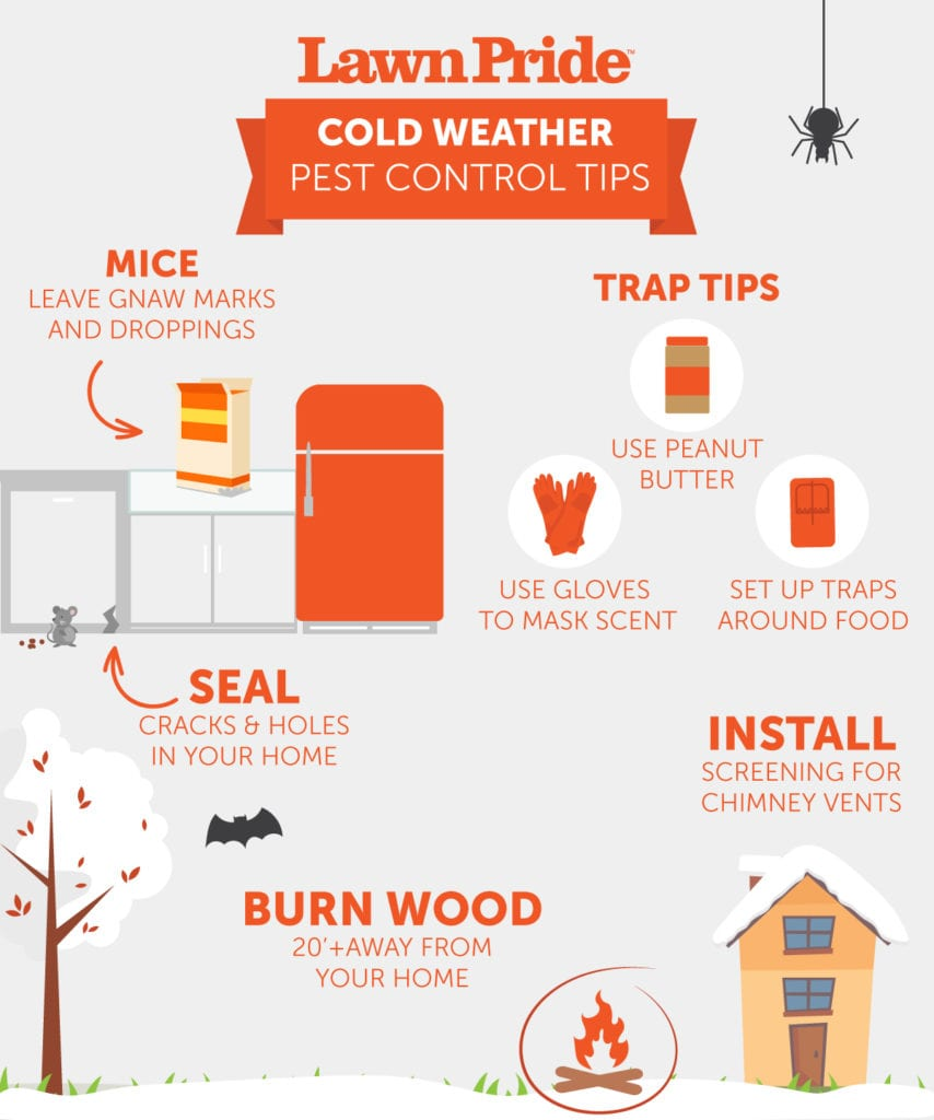 Cold Weather Pest Control