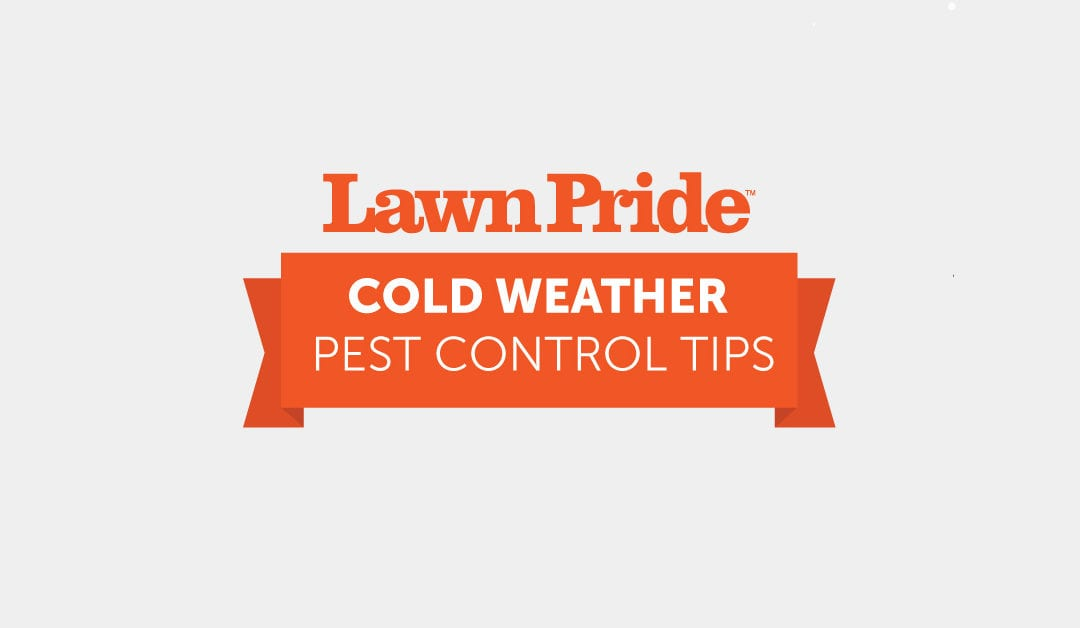 Cold Weather Pest Control Tips