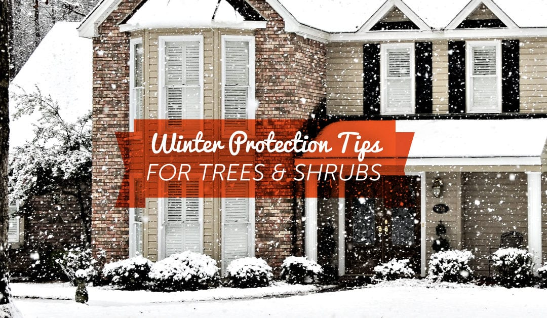 Protecting Trees & Shrubs During WinterNo ratings yet.