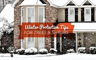 Protecting Trees & Shrubs During Winter