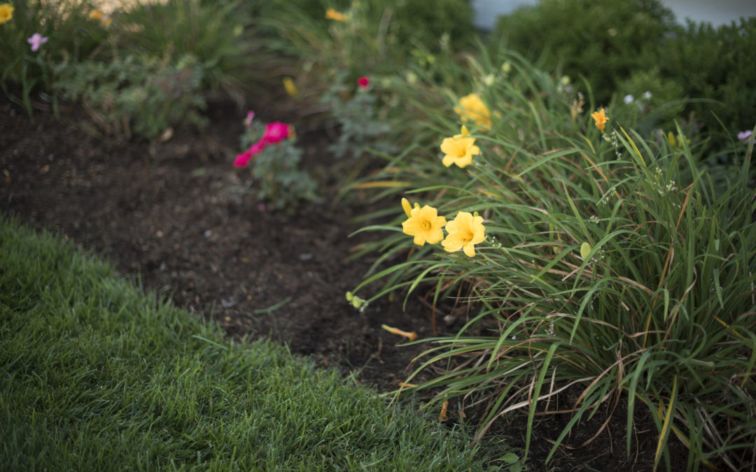 Why You Should Avoid Seeding Your Lawn In The Spring