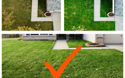 6 Bad Habits to Avoid for a Healthier and Better Looking Lawn                                        4.83/5(6)