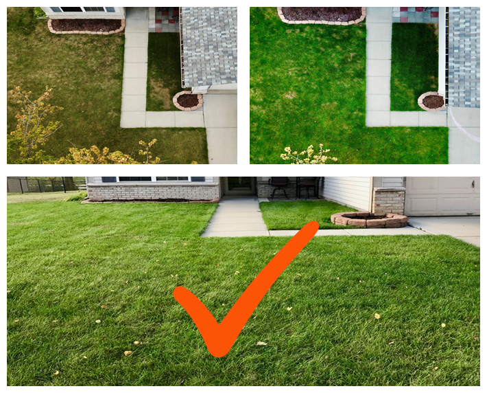 6 Bad Habits to Avoid for a Healthier and Better Looking Lawn